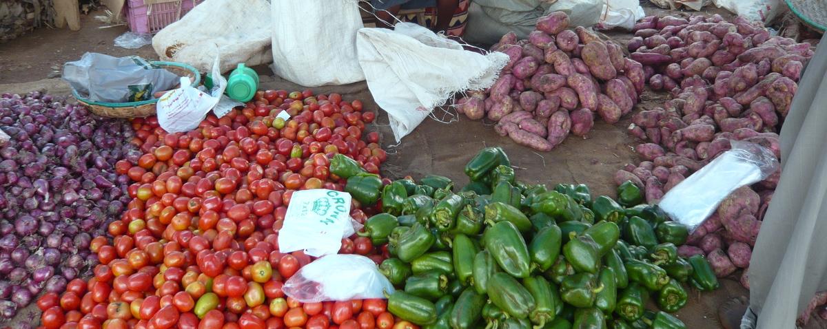 週に1度の野菜デー!地方から出荷される激レア野菜をゲットせよ!!
